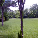 Big Yard